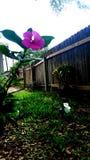 Forte fiore Immagini Stock