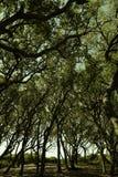 Forte Fisher, árvores do NC Live Oak imagem de stock