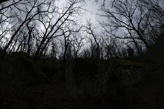 Forte lampadina in una foresta della quercia Fotografie Stock