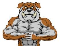 Forte mascotte del bulldog Fotografia Stock