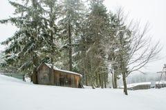 Forte nevicata in abetaia, tronchi di albero davanti al cottage immagini stock