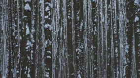 Forte nevicata che cade nella foresta archivi video