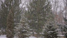 Forte nevicata che cade in una foresta nell'orario invernale stock footage