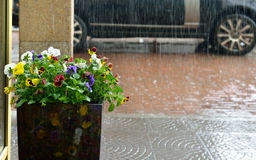 Forte pluie à Moscou, Photos stock