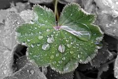 Forte pluie Photos stock
