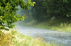 Forte pluie dans l'heure d'été Photographie stock