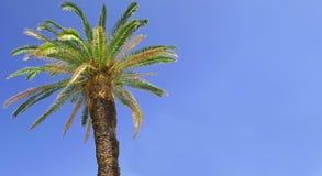 Forte vasto palmtree con cielo blu nei precedenti immagini stock libere da diritti