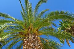 Forte vasto palmtree con cielo blu nei precedenti fotografia stock