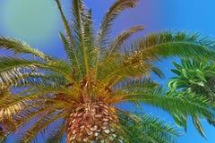 Forte vasto palmtree con cielo blu nei precedenti immagini stock