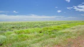 Forte vento no prado australiano video estoque