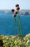 Forteresse Portugal de Sagres de littoral Photo libre de droits