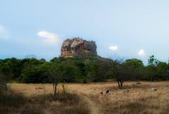Fortezza della roccia della roccia di Sigiriya Lion's Fotografia Stock Libera da Diritti