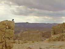 Fortezza di Masada con l'uccello Fotografia Stock