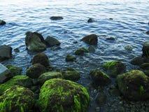 Fortfarande havskust med blått vatten och stenar Mossiga havsväxtstenar på den vulkaniska stranden Royaltyfri Foto