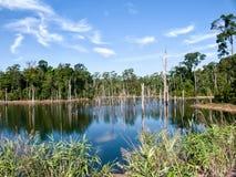 Fortfarande reflexion i en blå sjö Royaltyfri Fotografi