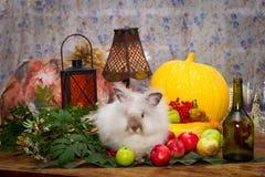 Fortfarande till dagen av tacksägelsen med höstgrönsaker, frukt, pump Royaltyfri Bild