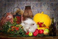 Fortfarande till dagen av tacksägelsen med höstgrönsaker, frukt, pump Royaltyfri Fotografi