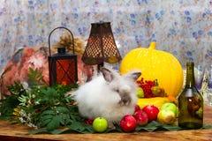 Fortfarande till dagen av tacksägelsen med höstgrönsaker, frukt, pump Arkivbild