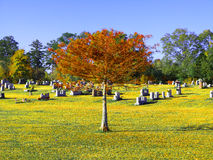 Fortfarande träd i gulingjordning Royaltyfri Foto