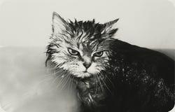 Fortfarande tvättat! Royaltyfri Foto