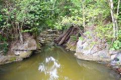 Fortfarande vaggar stangnerande förorenat vatten bland stort med stupade träd i skog royaltyfria bilder