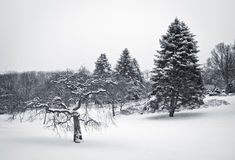 Fortfarande vinterplats Royaltyfri Fotografi