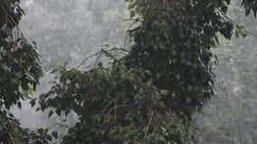 Forti venti e pioggia archivi video