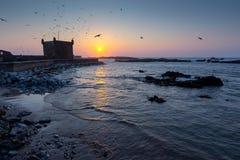 Fortificazione di Essaouira al tramonto con i gabbiani Immagine Stock