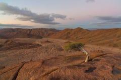 Fortleva trädet i hård miljö Royaltyfri Foto