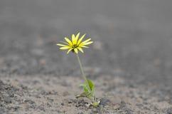 Fortleva växt för torka royaltyfria foton