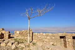 Fortress Masada, Israel Stock Photography