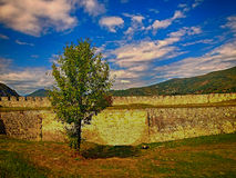 Fortress tree Royalty Free Stock Photography