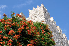 Fortress wall and a flowering tree on a background of blue sky Royalty Free Stock Photos
