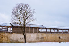 Fortress wall and tree in winter scene. Tree and fortress wall of Izborsk fortress in winter scene, Pskov Oblast Stock Photography