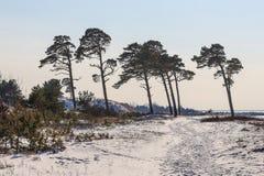 Forts ruinés en hiver Image libre de droits