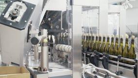 Fortskrider flaskor för grön färg för närbild transportörlinjen på en fabrik av champagne eller vin arkivfilmer