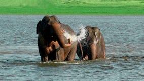 Fortunatamente bagnare le coppie romantiche dell'elefante Fotografia Stock Libera da Diritti