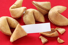 Fortune cookie with blank message. Fortune cookies are often served as a dessert in Chinese restaurants in the United States royalty free stock photo