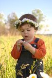 Fortune telling with daisy. Little boy in the sunny field with daisy. Plucking daisy petals is a way to know who loves you Royalty Free Stock Photography