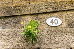 Forty. Badge on stone wall next to weed stock photography