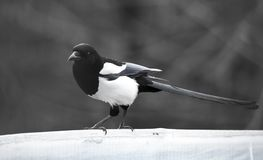 Forty bird in a park on the nature.  royalty free stock photography