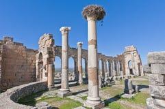 Forum columns at Volubilis, Morocco Stock Images