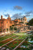 The Forum Romanum in Rome, Italy Royalty Free Stock Photos