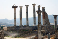 The Forum of Volubilis 2 Royalty Free Stock Photos