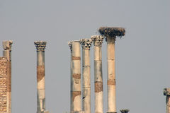 The Forum of Volubilis 3 stock photography