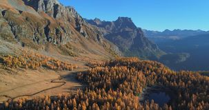Forward aerial over alpine mountain valley lake and orange larch forest woods in sunny autumn.Alps outdoor colorful stock footage