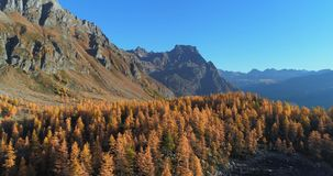 Forward aerial over alpine mountain valley lake and orange larch forest woods in sunny autumn.Alps outdoor colorful stock video footage