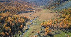 Forward aerial over alpine mountain valley and orange larch forest woods in sunny autumn.Europe Alps outdoor colorful stock footage