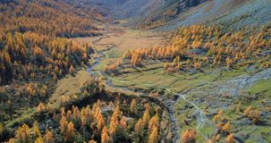 Forward aerial over alpine mountain valley and orange larch forest woods in sunny autumn.Europe Alps outdoor colorful stock video footage