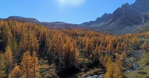 Forward aerial over alpine mountain valley and orange larch forest woods in sunny autumn.Europe Alps outdoor colorful stock video